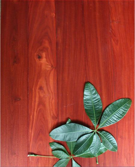 中林木业 厂家直销进口红檀香(香脂木豆)纯实木地板