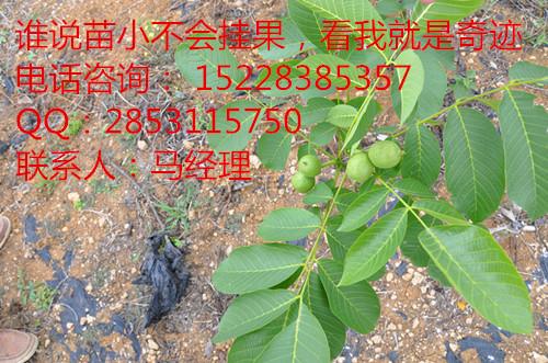 答:(1)土地上能生长任何杂草和杂树木,这样的土地都能种核桃苗.