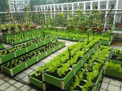如何在屋顶种菜,屋顶种菜需要注意什么高清图片 高清大图图片